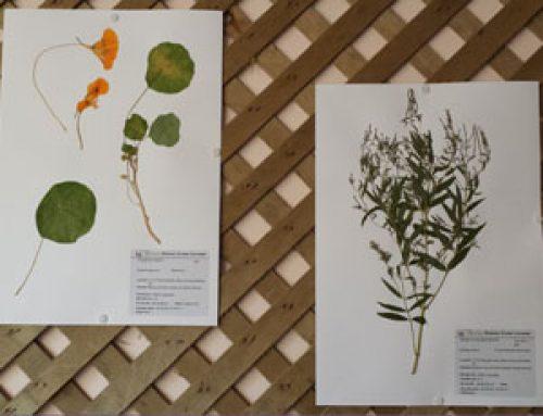 L'Herbier Claire Lacombe de l'Académie Herboliste